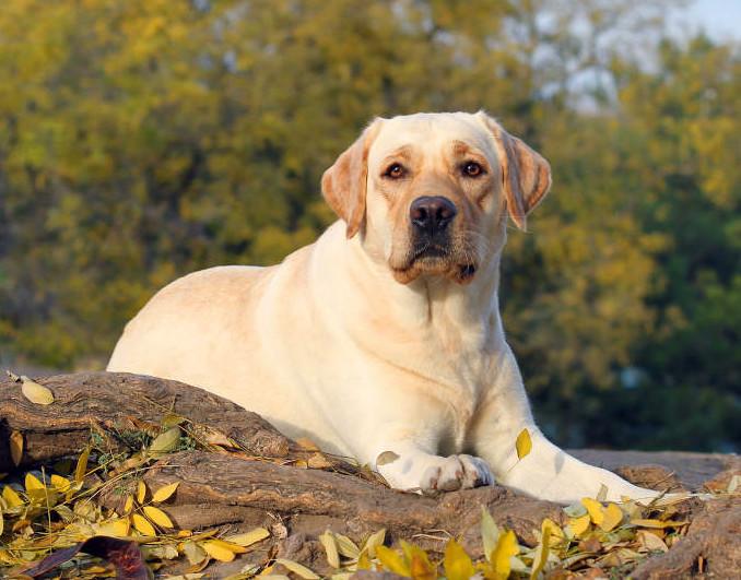 mesa cruz olx fazer tempo machado dar puppy cadela sp rj porto alegre pato valor americana