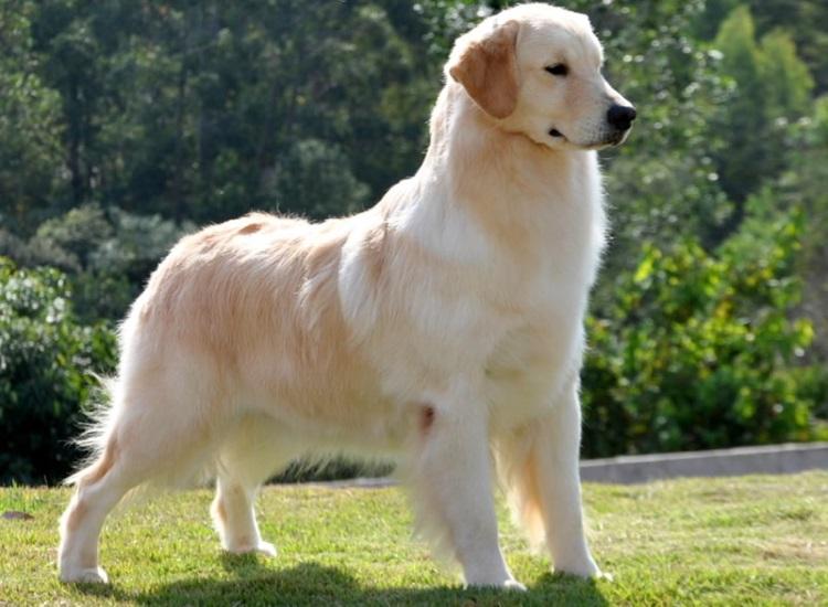 curitiba wallpaper zwergspitz mix sp cães sala rescue canina royal canina onde porto alegre