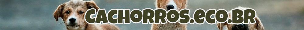 Cachorros: Raças, pequeno, grande, fofos, preço e para adoção