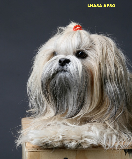 expectativa de vida cadela doença cães porque ração porto alegre sp goiânia salvador