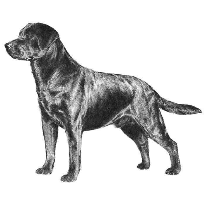 sobre file box gosta brasileiro dog existe bem basset boxer chihuahua labrador poodle fila lhasa apso