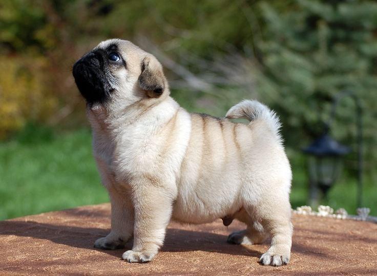 cães remédio cuidados são paulo banho onde rj franca pelo casa mata