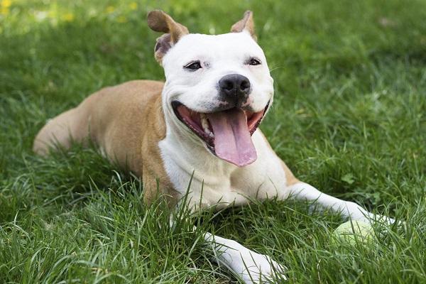 peitoral dog adoção atacado rede venda quanto mata mesa olx ft música cruz download dona corte são paulo sp porto alegre