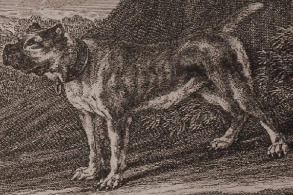 cães franca extra file nome atacado belo horizonte benevenutti concoórdia cuidados parente premio formiga goku hibrido instinto facebook