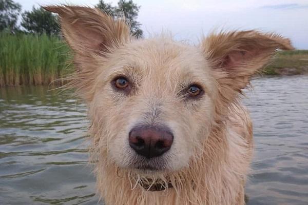 shitzu basset lanches porte yorkshire amor fox paulistinha golden hamburgueria telefone são paulo ração capa olhos animais médio dog