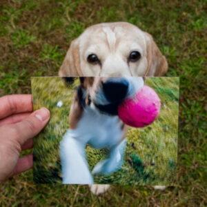 Como saber calcular idade domeu cachorro