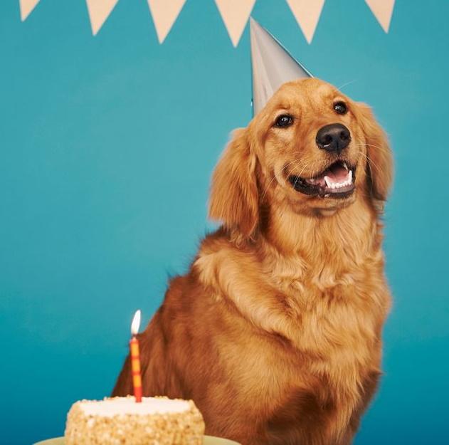 somar medir equivalência calendário cocker dachshund