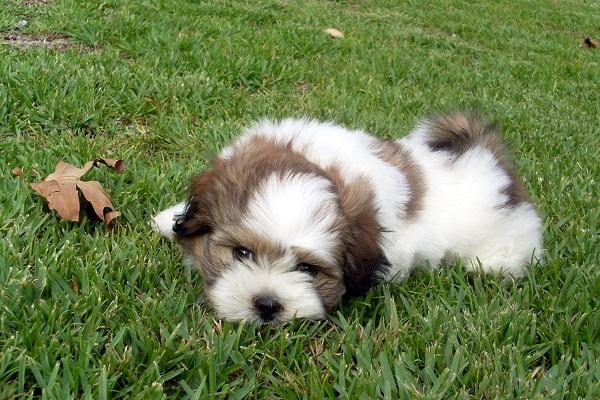 breeders mix dog philippines