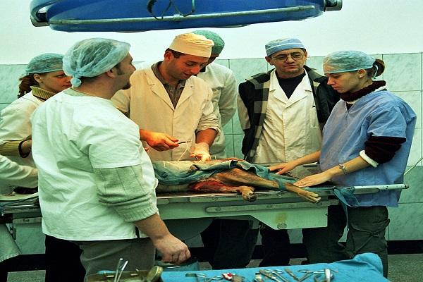 cirurgia em cachorro doente