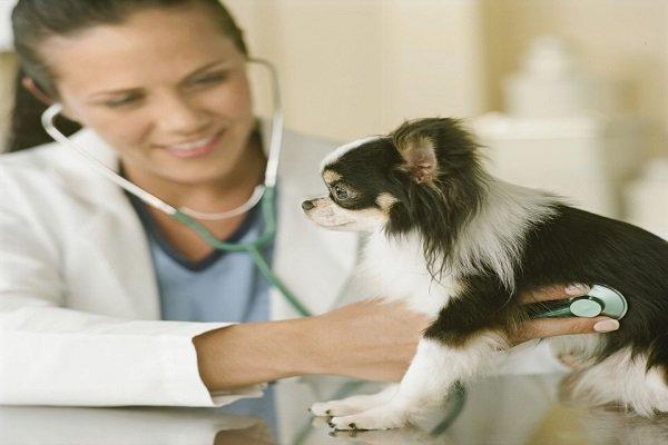 diagnostico e tratamento da cinomose