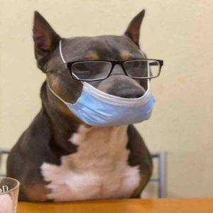 Coronavirose Canina