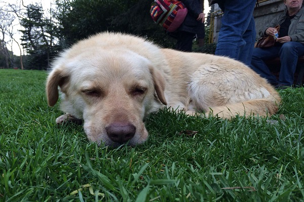 fique de olho na grama que seu cao dorme e brinca